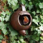 Teapot Robin nesting box gift
